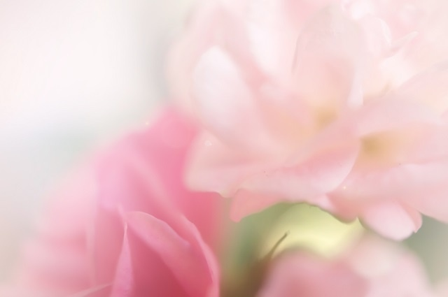 http://labell.ir/images/flowers/flowers-110.jpg