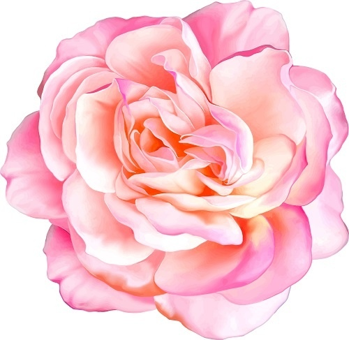 http://labell.ir/images/flowers/flowers-111.jpg