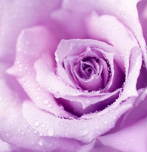 http://labell.ir/images/flowers/flowers-112.jpg