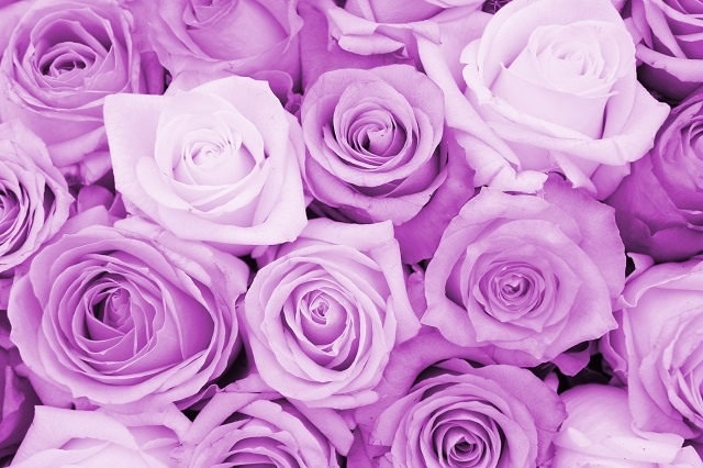 http://labell.ir/images/flowers/flowers-113.jpg
