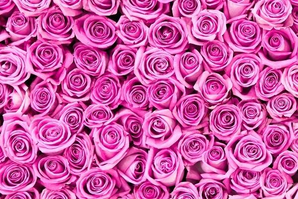 http://labell.ir/images/flowers/flowers-114.jpg