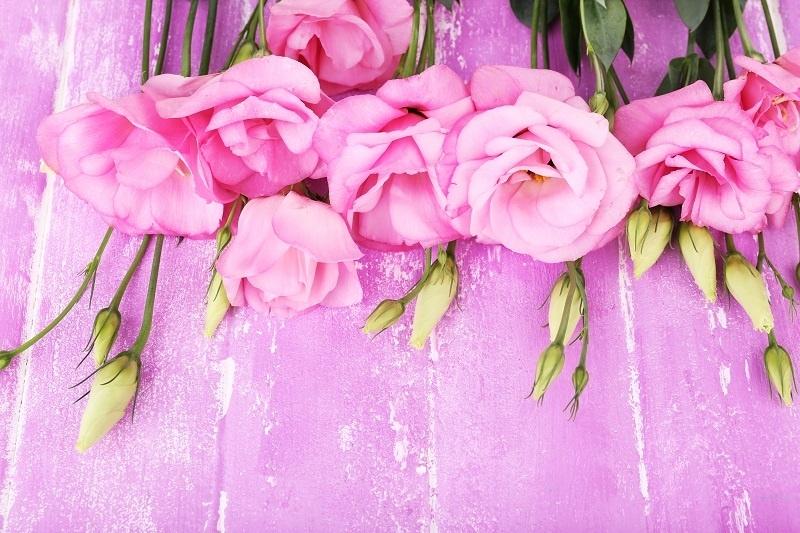http://labell.ir/images/flowers/flowers-115.jpg