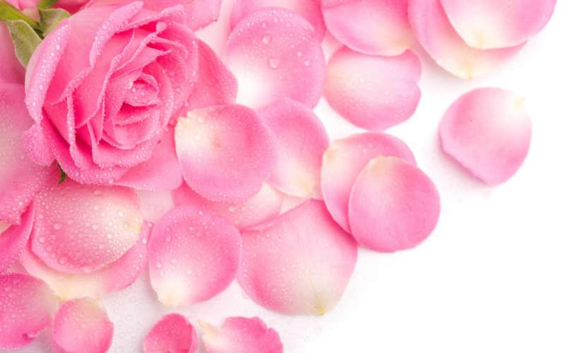 http://labell.ir/images/flowers/flowers-117.jpg