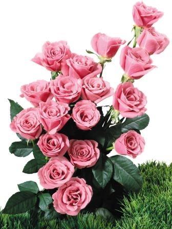 http://labell.ir/images/flowers/flowers-118.jpg