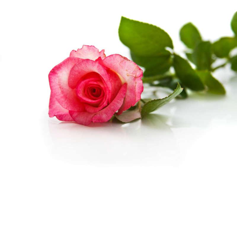 http://labell.ir/images/flowers/flowers-119.jpg
