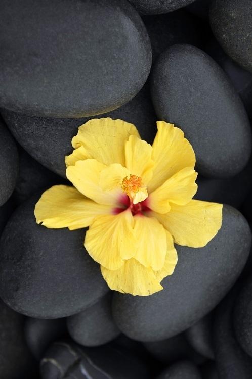 http://labell.ir/images/flowers/flowers-120.jpg