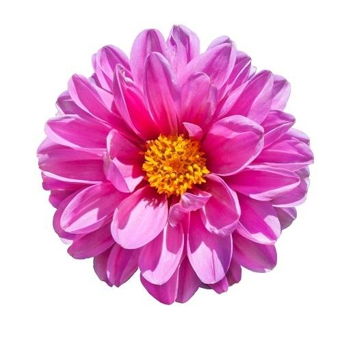 http://labell.ir/images/flowers/flowers-122.jpg