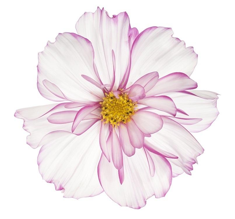 http://labell.ir/images/flowers/flowers-124.jpg
