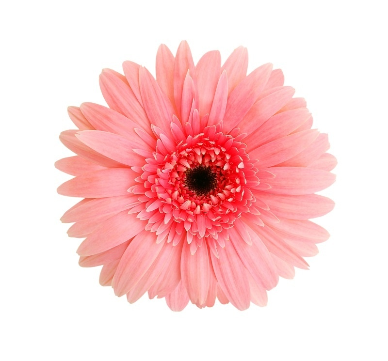 http://labell.ir/images/flowers/flowers-126.jpg