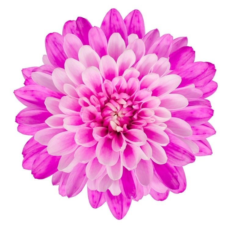 http://labell.ir/images/flowers/flowers-128.jpg