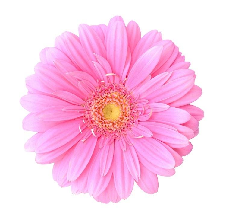 http://labell.ir/images/flowers/flowers-129.jpg