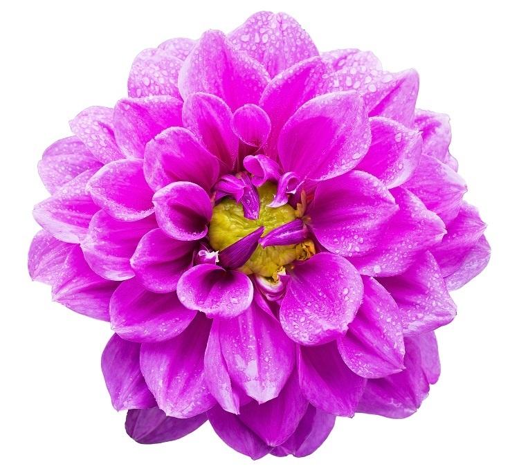 http://labell.ir/images/flowers/flowers-130.jpg