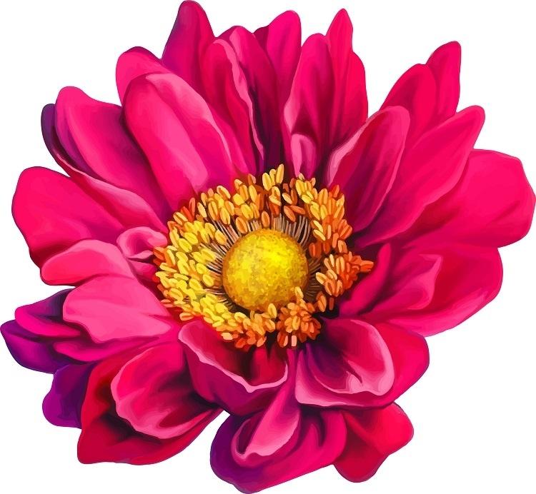 http://labell.ir/images/flowers/flowers-132.jpg