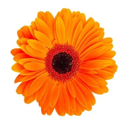 http://labell.ir/images/flowers/flowers-133.jpg