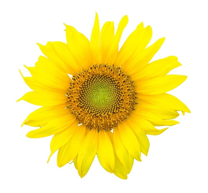 http://labell.ir/images/flowers/flowers-134.jpg