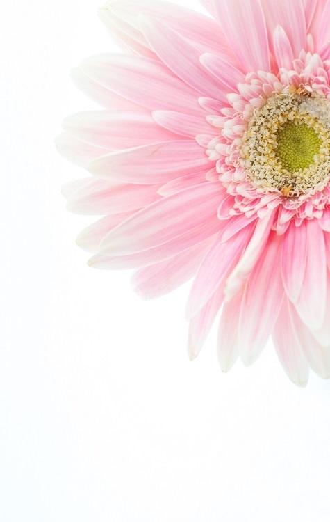 http://labell.ir/images/flowers/flowers-136.jpg