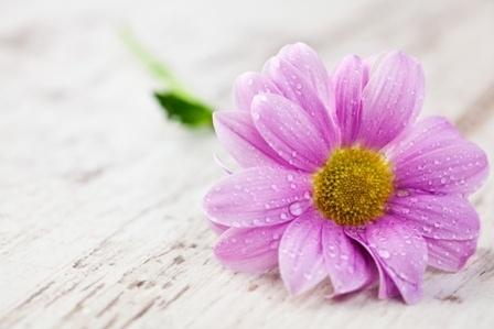 http://labell.ir/images/flowers/flowers-137.jpg