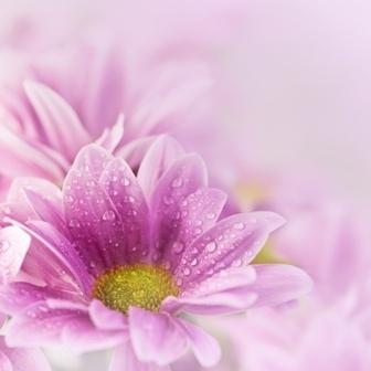 http://labell.ir/images/flowers/flowers-138.jpg