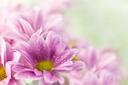 http://labell.ir/images/flowers/flowers-141.jpg