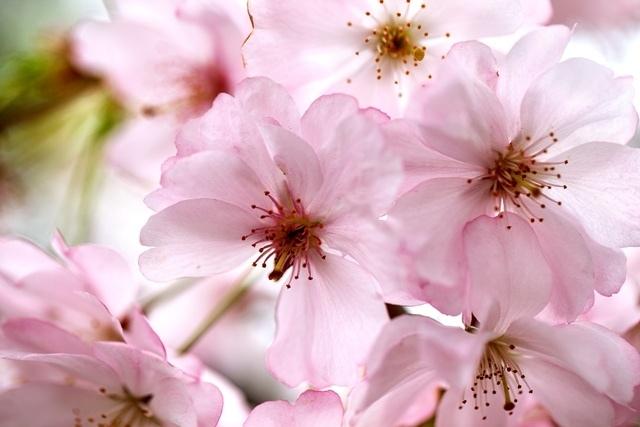 http://labell.ir/images/flowers/flowers-143.jpg