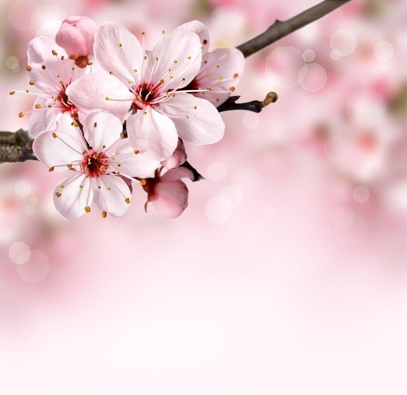http://labell.ir/images/flowers/flowers-144.jpg