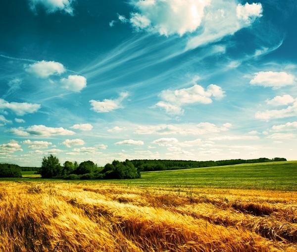 http://labell.ir/images/landscape/landscape-035.jpg