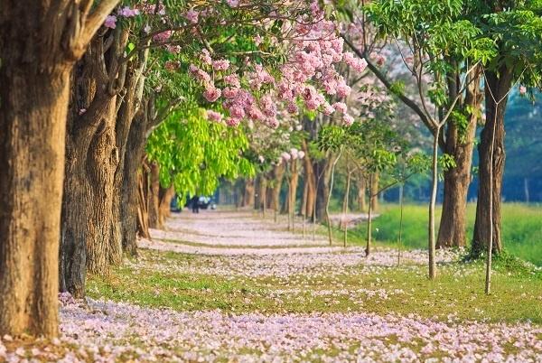 http://labell.ir/images/landscape/landscape-042.jpg