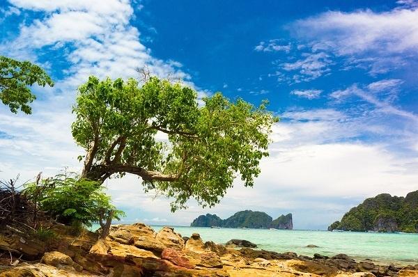 http://labell.ir/images/landscape/landscape-057.jpg
