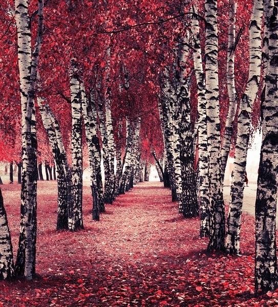 http://labell.ir/images/landscape/landscape-060.jpg
