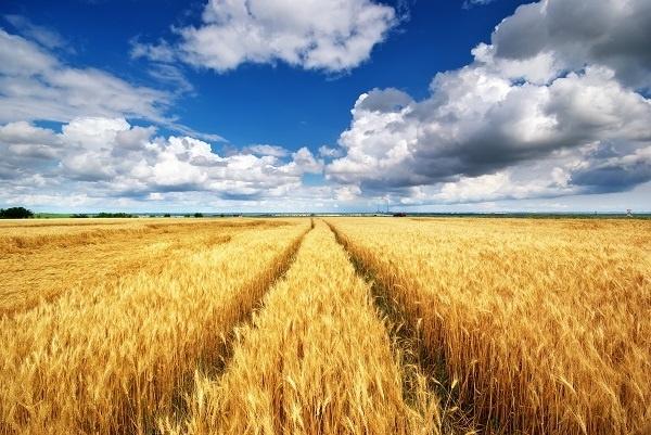 http://labell.ir/images/landscape/landscape-073.jpg