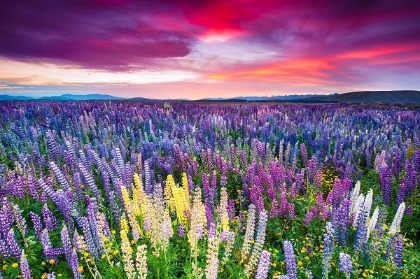 http://labell.ir/images/landscape/landscape-074.jpg