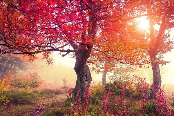 http://labell.ir/images/landscape/landscape-075.jpg