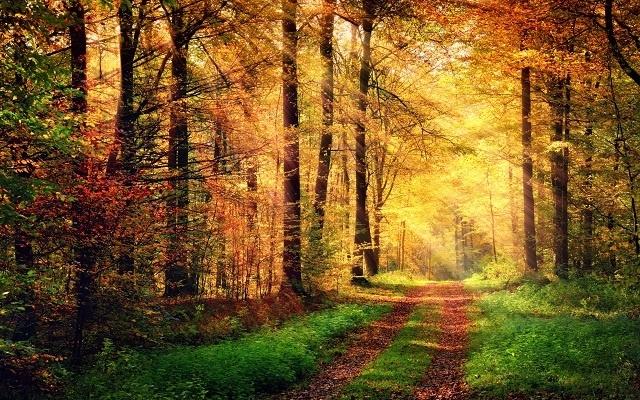 http://labell.ir/images/landscape/landscape-112.jpg
