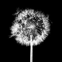 سیاه و سفید (10)