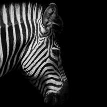 سیاه و سفید (20)