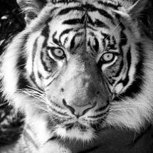 سیاه و سفید (23)