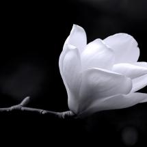 سیاه و سفید (25)