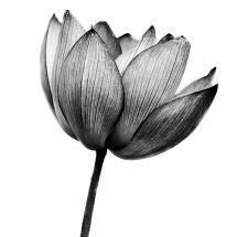 سیاه و سفید (6)