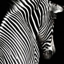 سیاه و سفید (9)