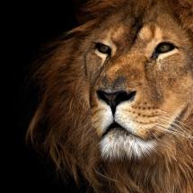 animal-حیوانات (1)