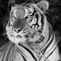animal-حیوانات (2)