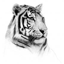animal-حیوانات (36)
