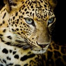 animal-حیوانات (39)