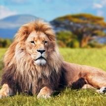 animal-حیوانات (40)