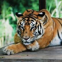 animal-حیوانات (45)