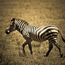animal-حیوانات (48)