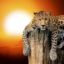 animal-حیوانات (65)