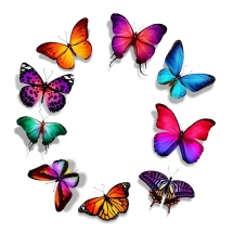 butterfly-پروانه (1)