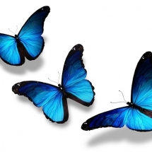 butterfly-پروانه (10)