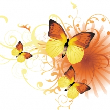butterfly-پروانه (108)